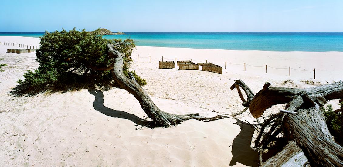 Su Giudeu beach - Shelterbelts